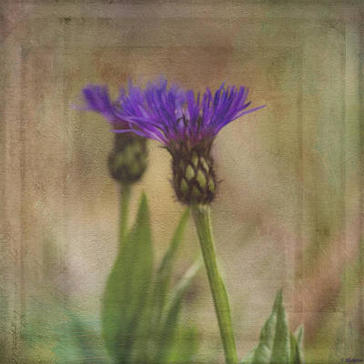 Photograph - Flower Art - Waiting For Others by Jordan Blackstone
