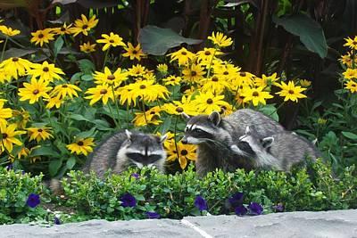 Photograph - Flower Bandits by Tara Lowry