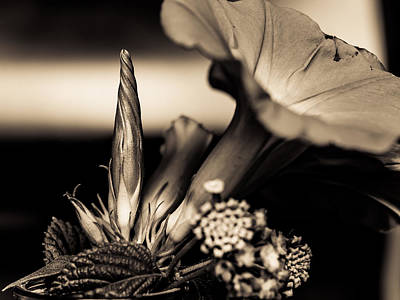 Photograph - Flower Beauty II by Marco Oliveira