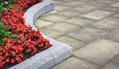 Ledge Photograph - Flower Bed by Tom Gowanlock