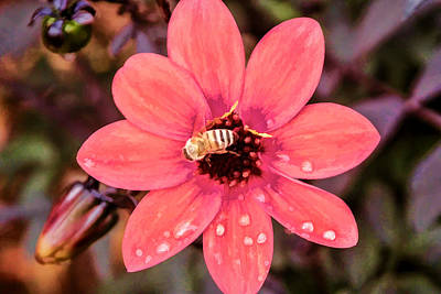 Digital Art - Flower Bee by Photographic Art by Russel Ray Photos