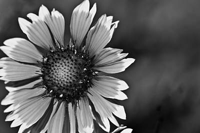Photograph - Flower Black And White #1 by Beth Sawickie