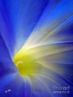 Photograph - Flower Blues by Joy Tudor