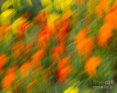 Photograph - Flower Blur by Dale Nelson