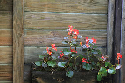 Photograph - Flower Box by Joseph G Holland