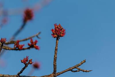 Winter Animals - Flower bud by SAURAVphoto Online Store