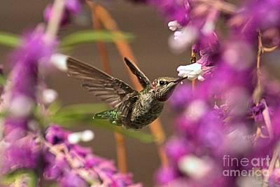 Photograph - Flower Buffet by Adam Jewell