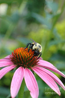 Flower Bumble Bee Print by Jt PhotoDesign