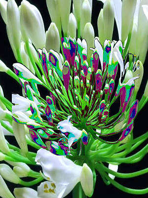 Mixed Media - Flower Bunch Bush Sensual Exotic Valentine's Day Gifts by Navin Joshi