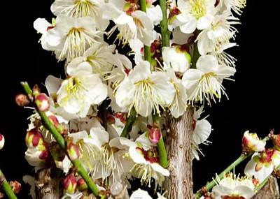 Mixed Media - Flower Bunch Bush White Cream Strands Sensual Exotic Valentine's Day Gifts by Navin Joshi