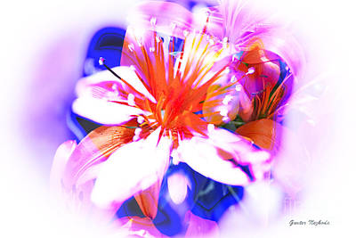 Photograph - Flower Burst by Gunter Nezhoda