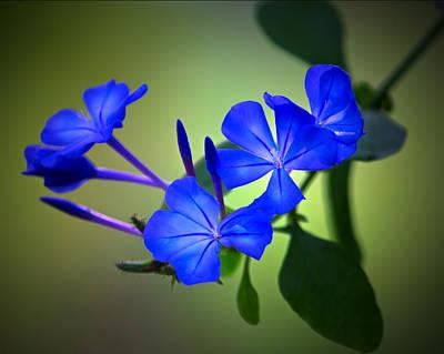 Photograph - Flower Burst by Mark Andrew Thomas
