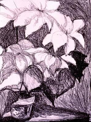 Still Life Drawings - Flower Burst Original by Kendall Kessler