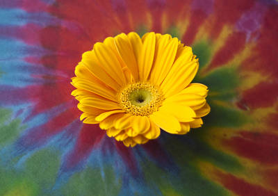 Photograph - Flower Child by Christi Kraft