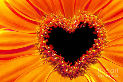 Fragility Photograph - Flower Close Up With A Heart Shaped Stamens Section by Michal Bednarek