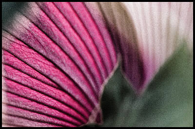 Robert Walker Photograph - Flower Close Up by Robert Walker