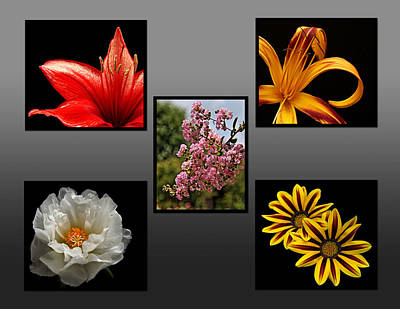 Photograph - Flower Collage by Judy Vincent