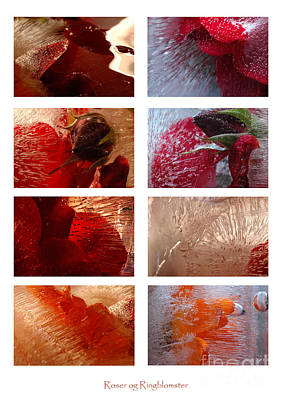 Photograph - Flower Collage Vertical by Randi Grace Nilsberg