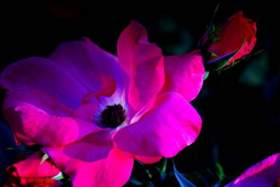 Photograph - Flower Continuum  by Walter  Holland