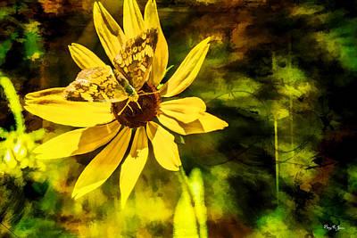 Photograph - Butterfly - Blossom - Flower Dance by Barry Jones