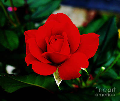 Photograph - Flower  - Daring Red Rose - Luther Fine Art by Luther Fine Art