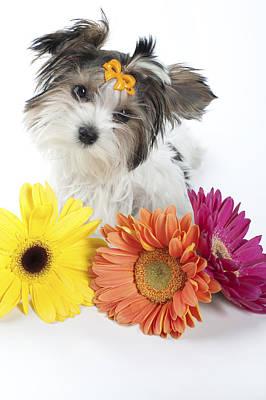 Flower Doggie Art Print