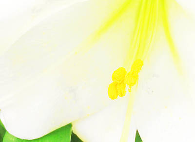 Photograph - Flower -easter Lily Macro - Luther Fine Art by Luther Fine Art