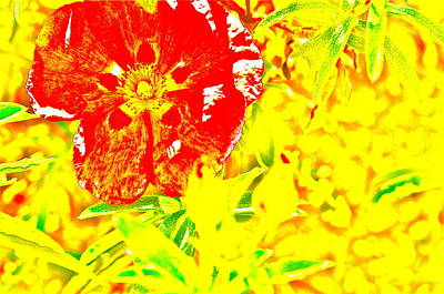 Photograph - Flower Effects by Joe  Burns
