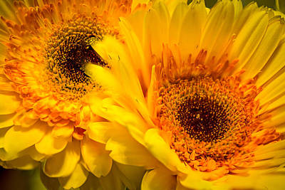 Photograph - Flower Eyes by Steven Santamour