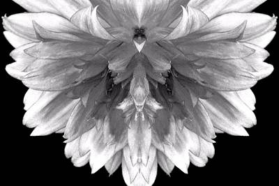 Photograph - Flower Fan Abstract by Marianne Dow