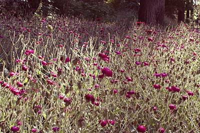 Faries Digital Art - Flower Field by Alma Yamazaki