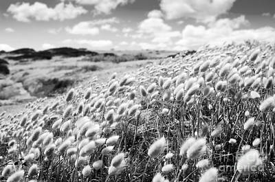 Roaring Red - Flower Field Black and White by THP Creative