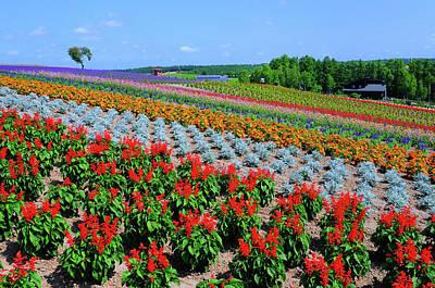 Scenery Photograph - Flower Field by Frank Chen