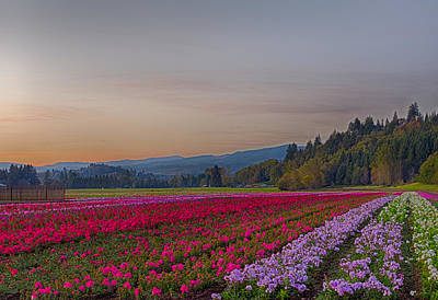 Photograph - Flower Fields At Sunset 1 by Leah Palmer