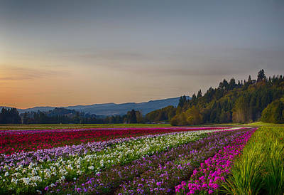 Photograph - Flower Fields At Sunset 2 by Leah Palmer