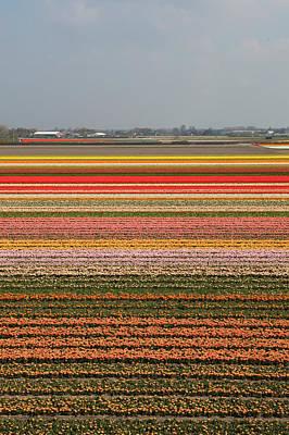 Flower Fields In Holland Art Print