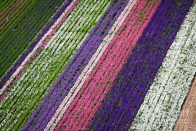 Pittsburgh According To Ron Magnes - Flower Fields by John Ferrante