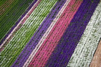 Photograph - Flower Fields by John Ferrante