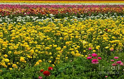 Photograph - Flower Fields by Peggy Hughes