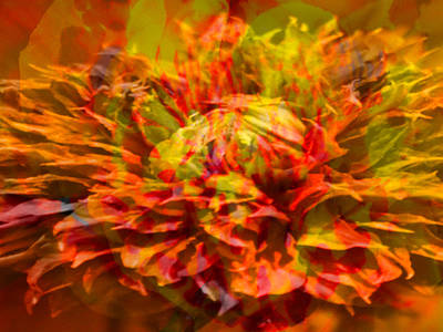 Wall Art - Photograph - Flower Fire by James Chesnick