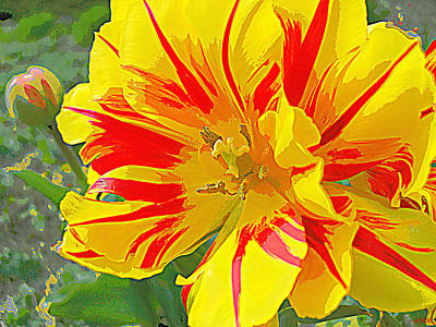Photograph - Flower Flames by Heidi Manly