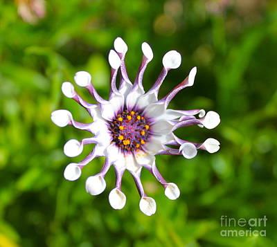 Photograph - Flower Float by Pamela Walrath