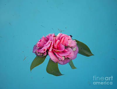 Photograph - Flower Floating In Pond by Jacek Malipan