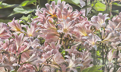 Photograph - Flower - Fragrant Summer Lilies - Luther Fine Art by Luther Fine Art