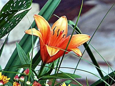 Art Print featuring the photograph Flower Friend by Joetta Beauford