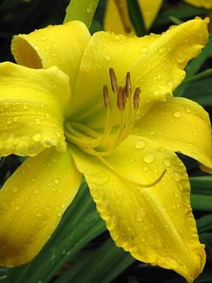 Photograph - Flower Garden 09 by Pamela Critchlow
