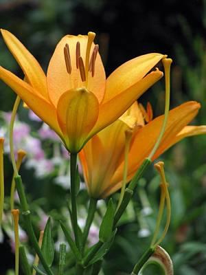 Photograph - Flower Garden 22 by Pamela Critchlow