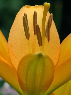 Photograph - Flower Garden 23 by Pamela Critchlow