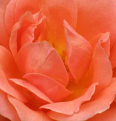 Photograph - Flower Garden 29 by Pamela Critchlow