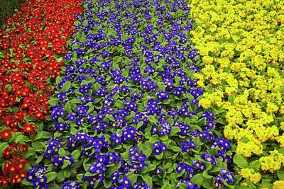 Dunedin Photograph - Flower Garden At Dunedin Railway by David Wall